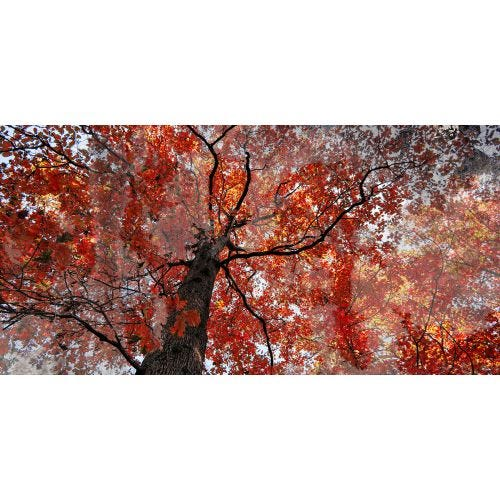 AUTUMN RED CANVAS ART 30x60